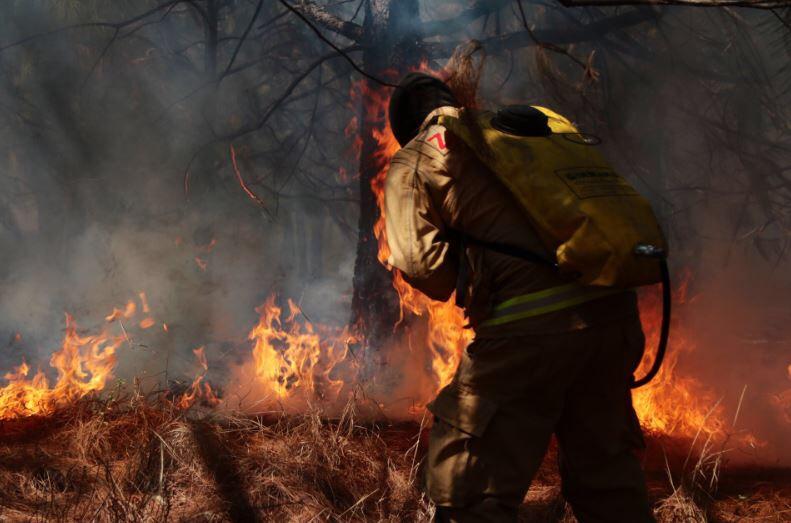34% de los incendios en Jalisco son provocados intencionalmente: Semadet