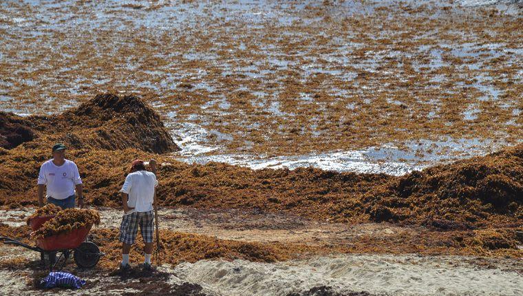 Pese a toneladas de sargazo, gobierno de Q.Roo asegura limpieza en sus playas