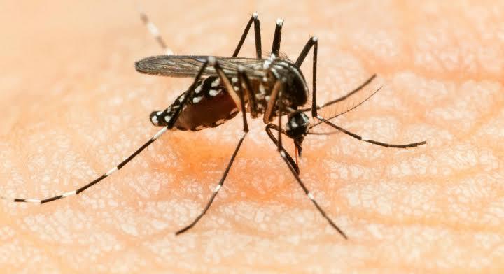 El dengue se multiplica exponencialmente