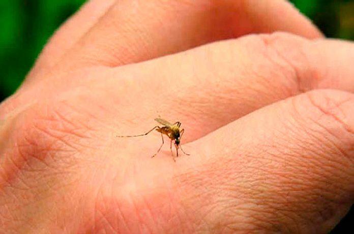 Piden destitución de Petersen por aumento de dengue en Jalisco