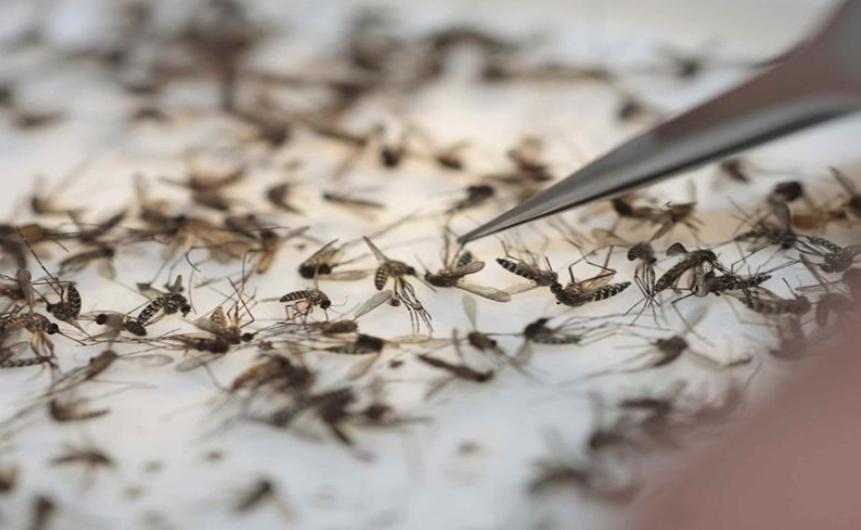 Ya suman casi siete mil casos de dengue en Jalisco