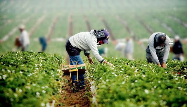 Berrymex evade responsabilidad por muerte de un trabajador
